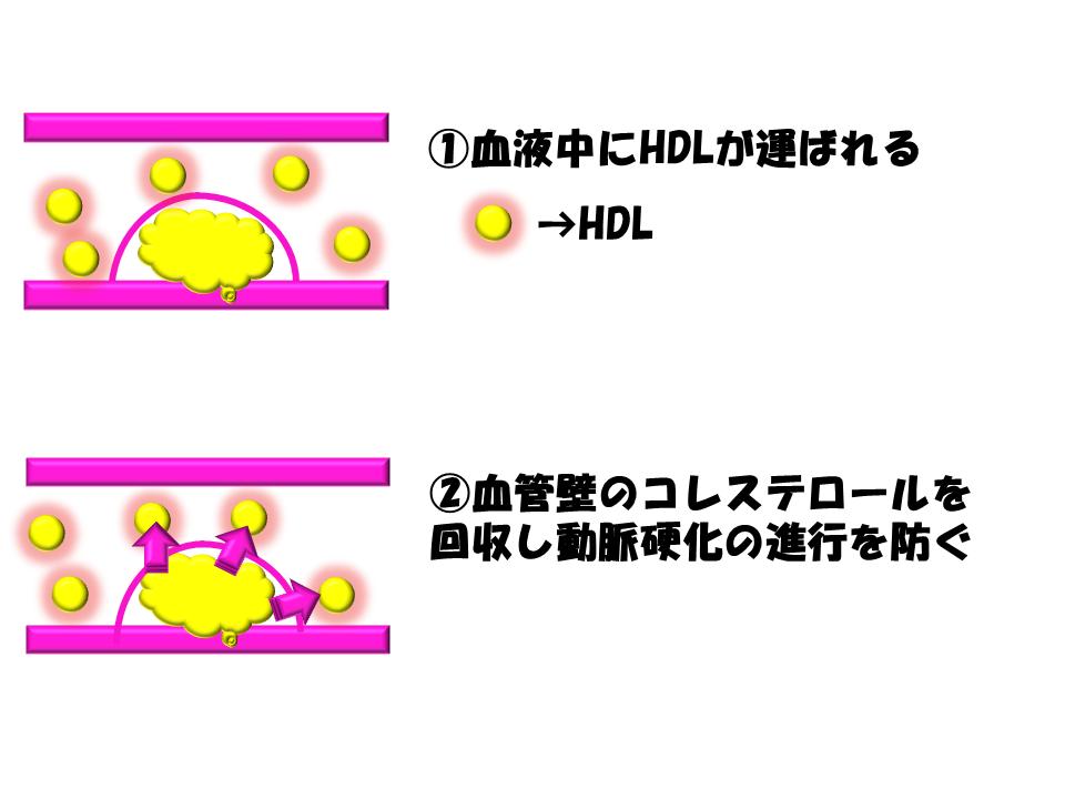 HDL作用機序